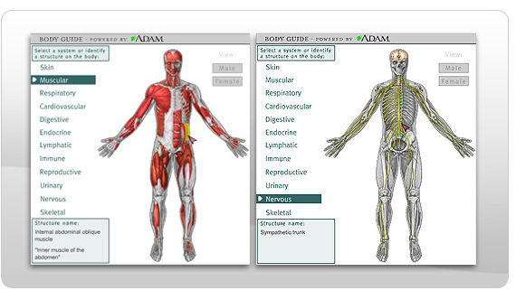 Human Body System Parts